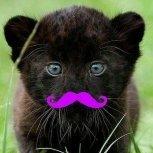 Wondercat