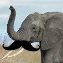 ElephantEarwax