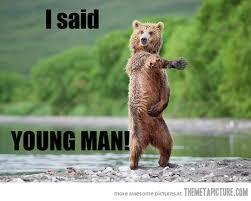 Image result for funny bear pictures