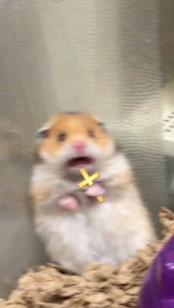 Crucifix | Scared Hamster | Know Your Meme