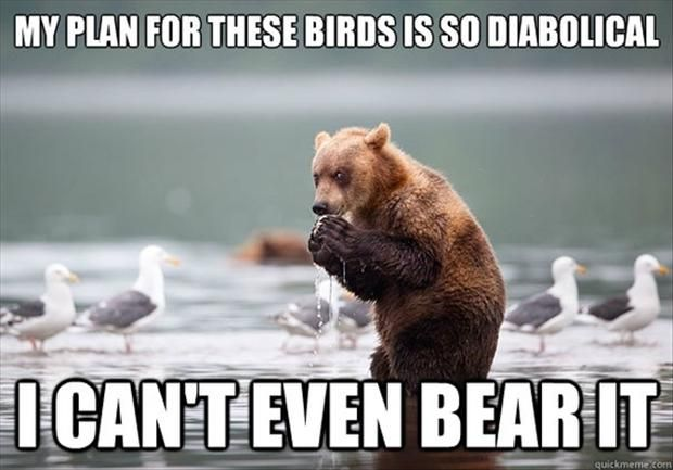 10 Philosophical Bears Thinking Deep Bear Thoughts   Funny bears ...