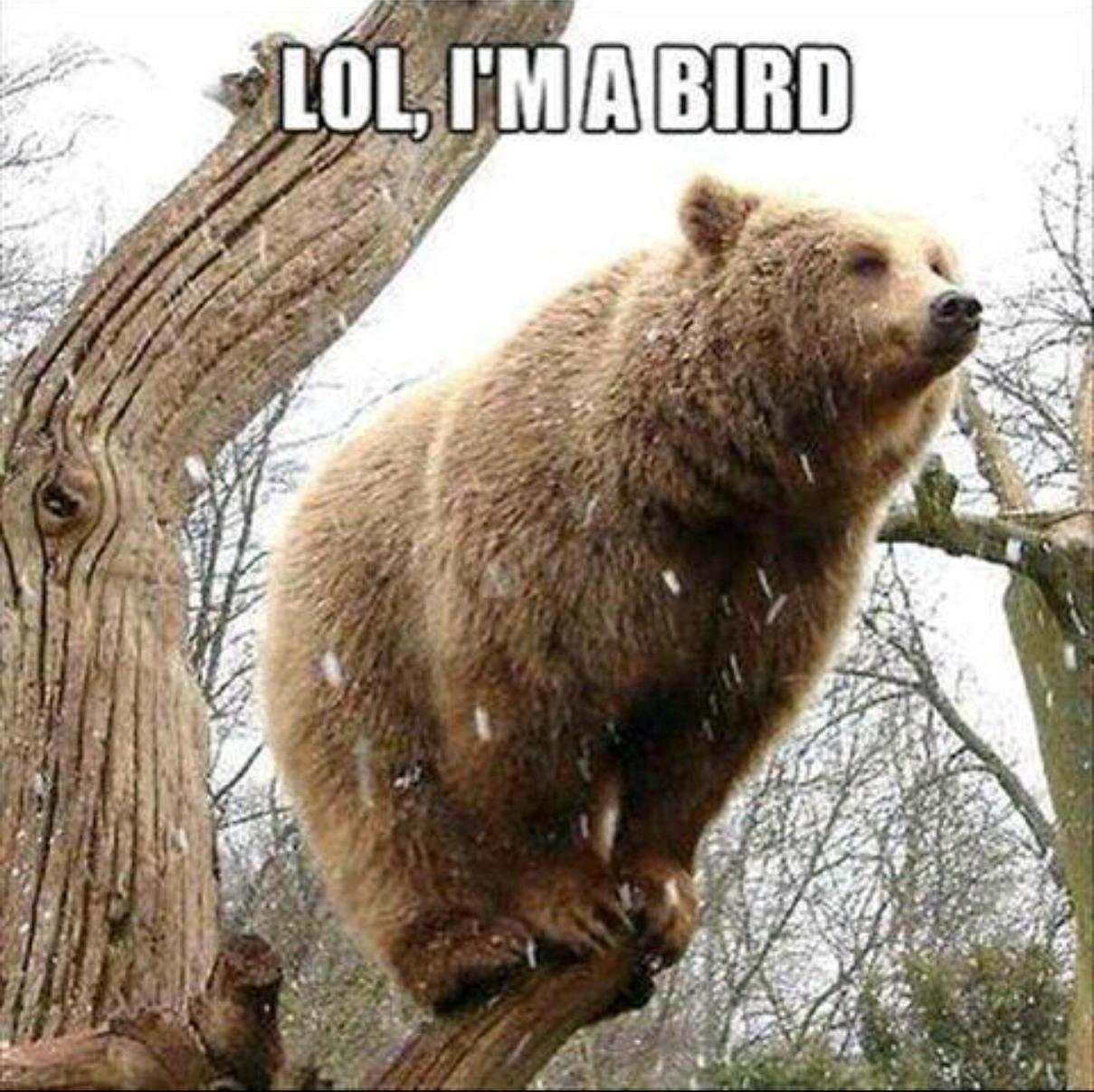 I forgot how to bear - Meme by shadow4ya :) Memedroid