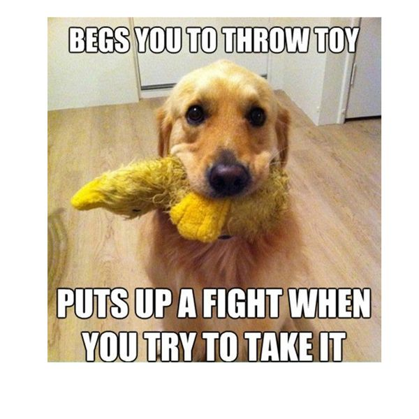 Dog Memes - Funny Pictures with Dogs and Puppy
