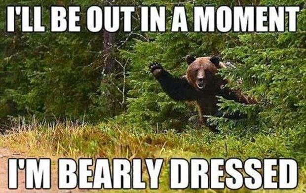 34 Most Funny Bear Meme Pictures