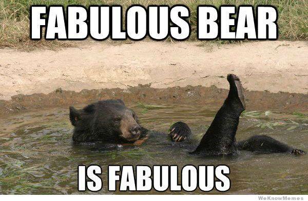 Image result for bear meme