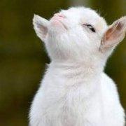 Goatbringer