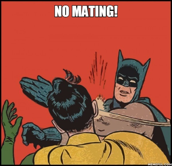 Batman-Slapping-Robin no mating.jpg