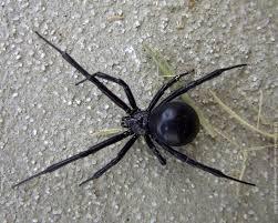 Spider 5.jpg