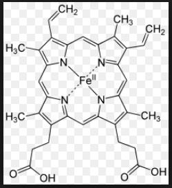 basic hemoglobin.png