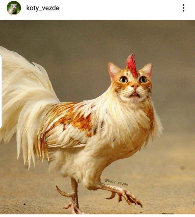 Screenshot_20210722-134312_Instagram.jpg