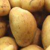 potatopicker